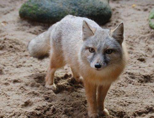 Fuchsgehege